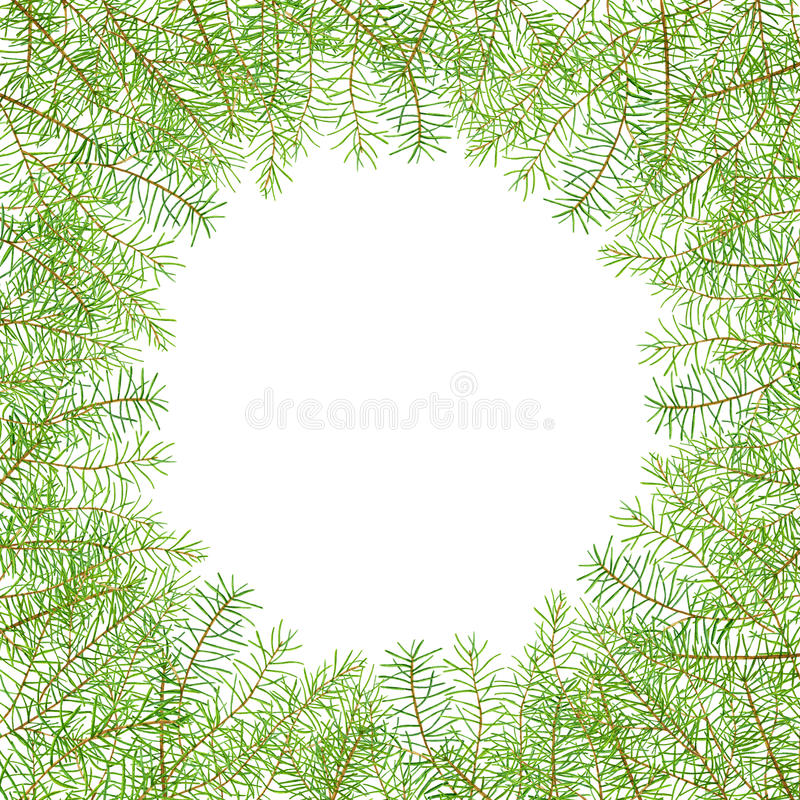 绿色水彩框架杉木分支 皇族释放例证