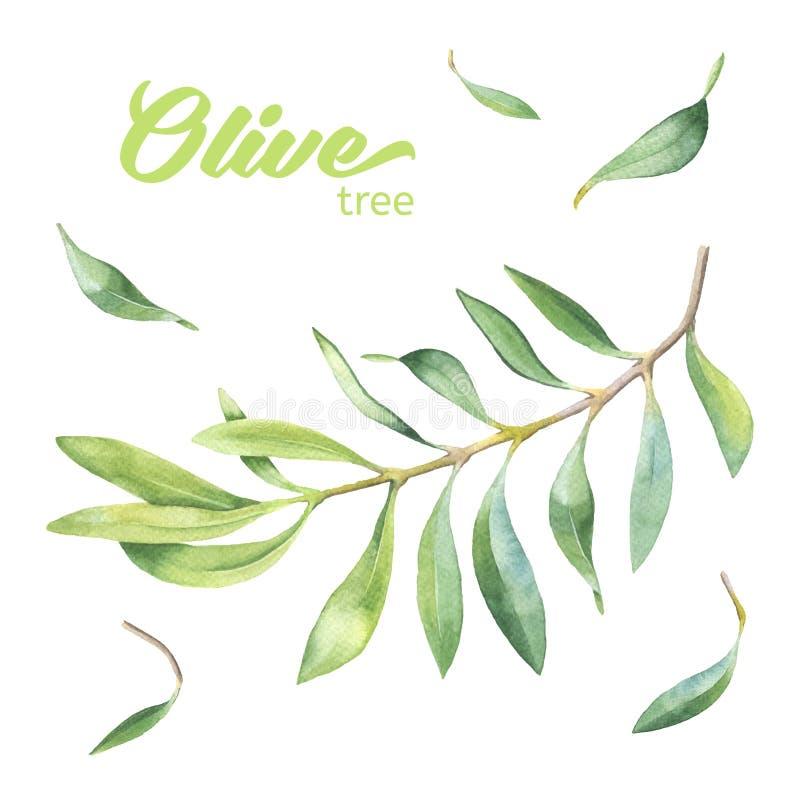 绿色水彩橄榄树枝 向量例证