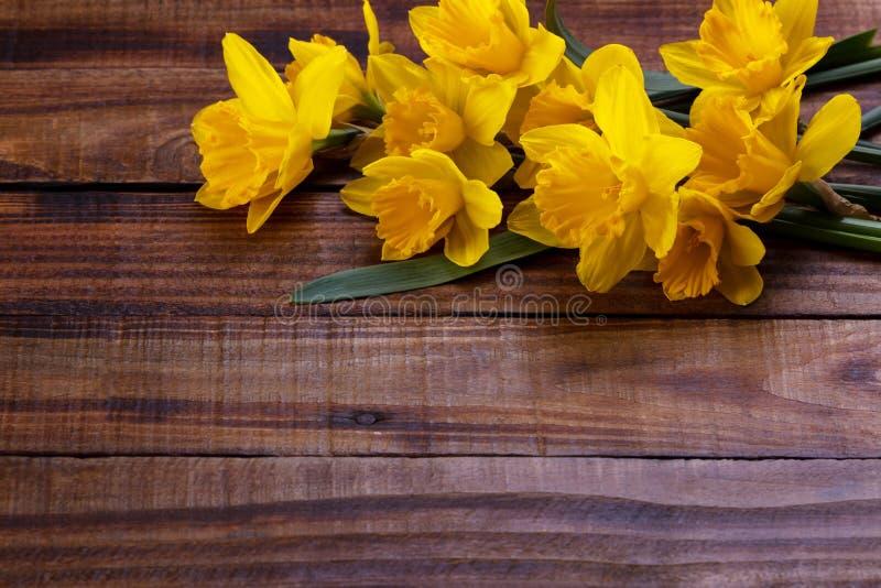 黄色水仙或黄水仙 免版税库存照片