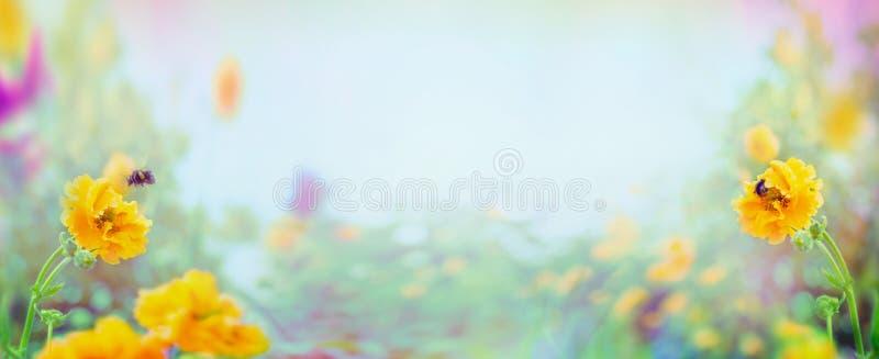 黄色水杨梅花和土蜂在被弄脏的夏天庭院或公园背景,横幅 库存照片