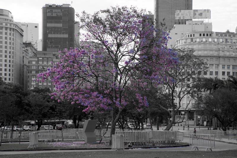 紫色结构树 免版税图库摄影