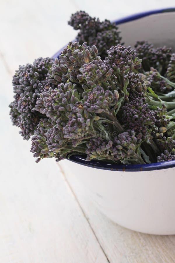 紫色洋椰菜花 免版税图库摄影