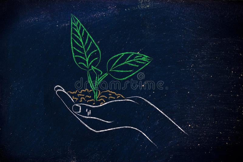 绿色经济,拿着新的植物的手的概念 免版税库存照片