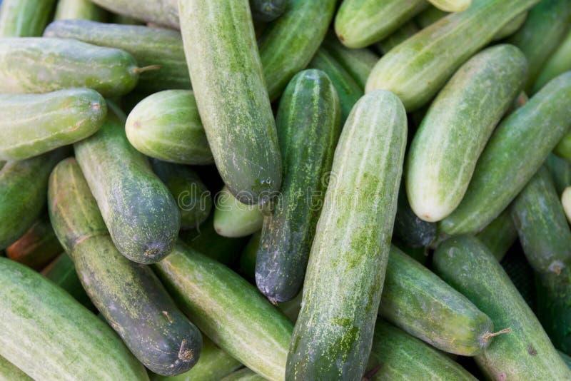 绿色黄瓜 库存图片