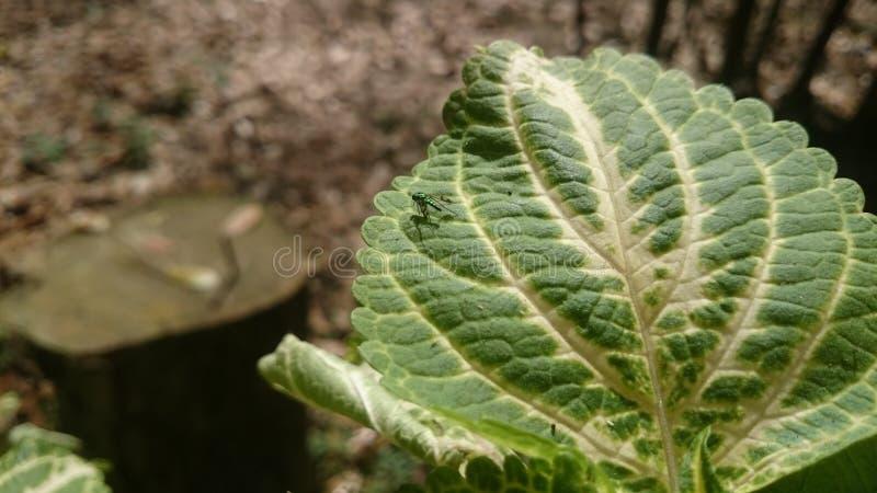 绿色洪都拉斯动植物 库存照片