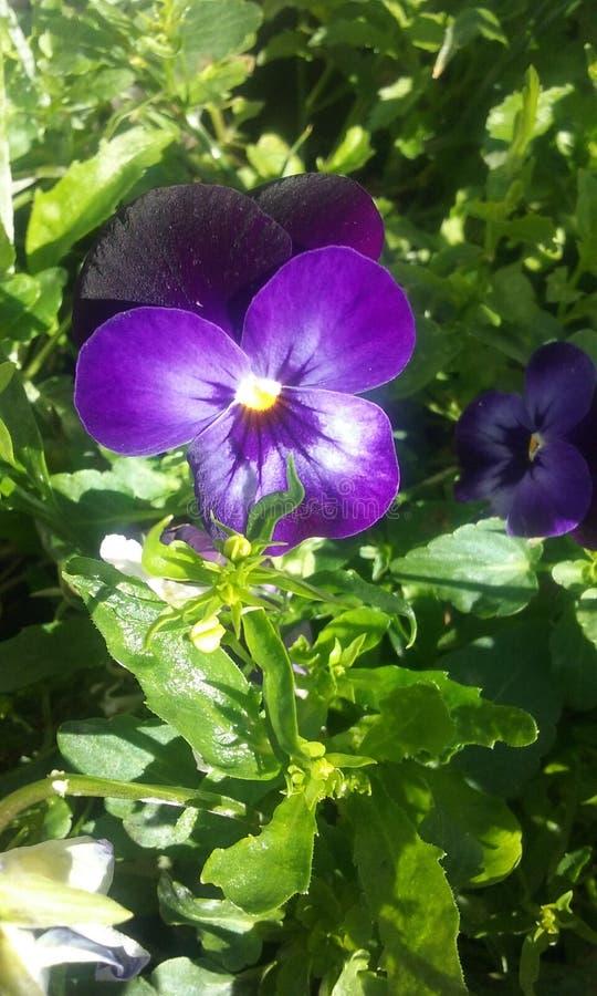 紫色阴霾 库存照片