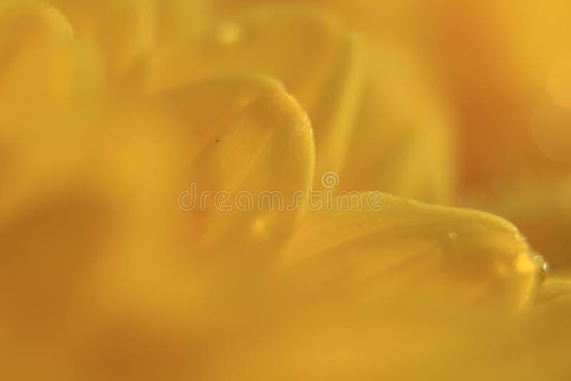 黄色 免版税库存图片
