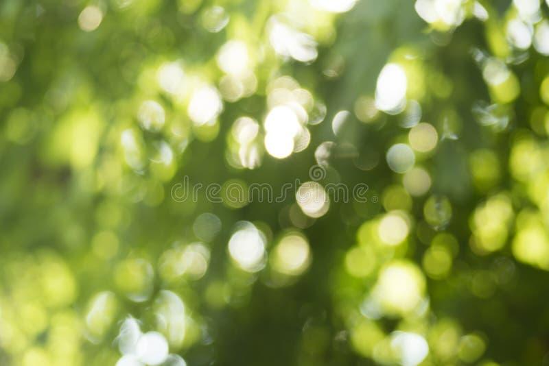 绿色Bokeh 库存照片