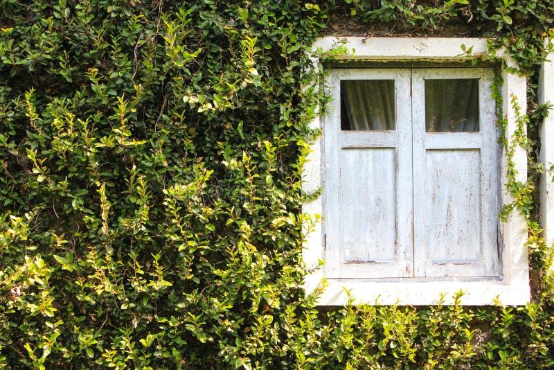 绿色Buiding窗口 免版税库存照片