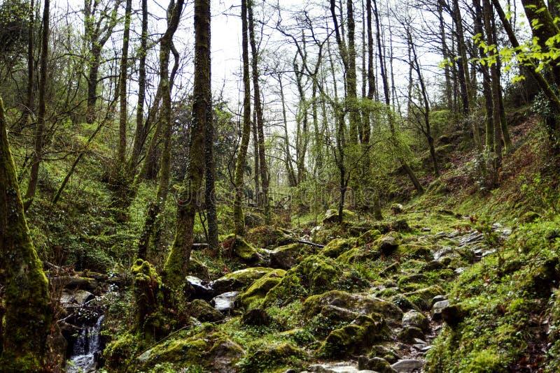 绿色Euskadi 免版税库存照片