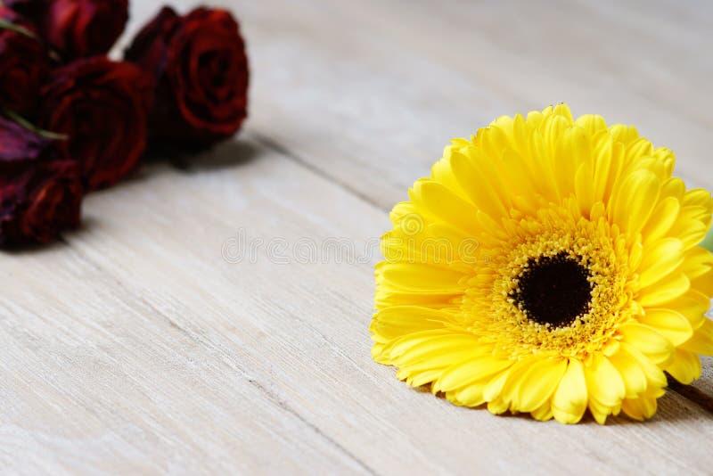 黄色gerber和干玫瑰 库存照片