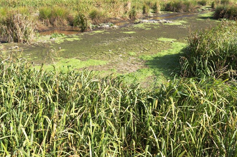 绿色Jonker沼泽风景 图库摄影