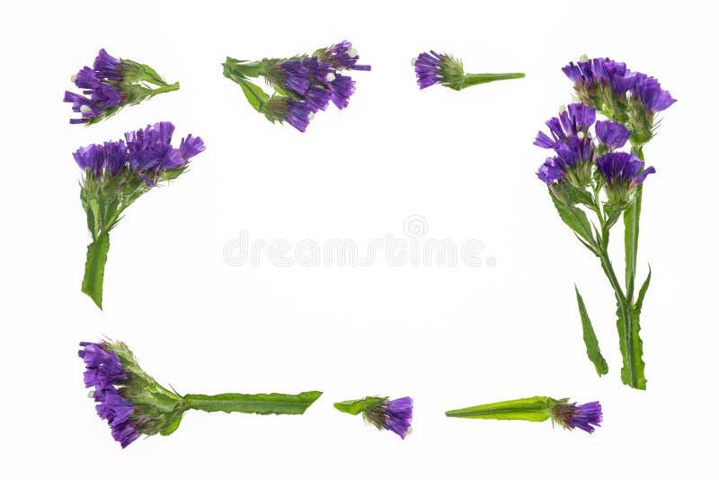 紫色statice开花边界框架 免版税库存图片
