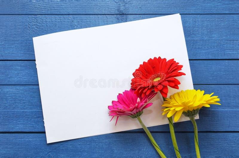 艺术品的嘲笑庆祝、图画和文本的在蓝色木背景与三根色的花大丁草 ?? 库存图片
