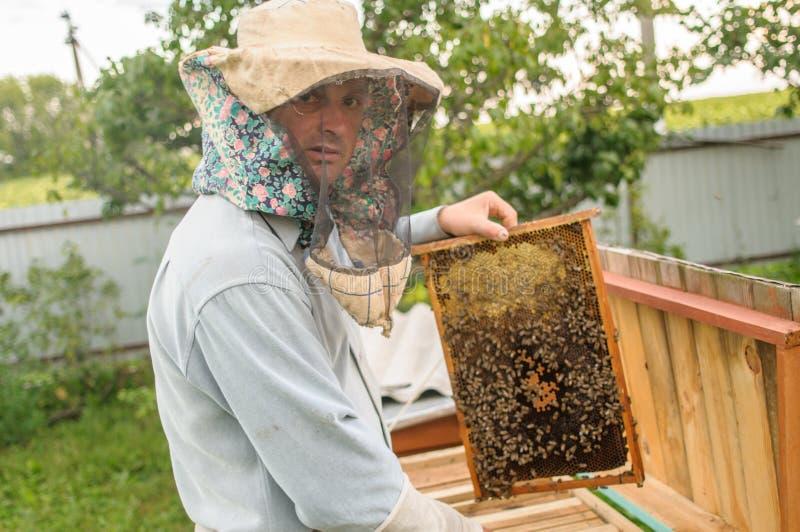 艺术大师的一个人,蜂农,拿着并且显示与很大数量的蜂的一个框架 免版税库存照片