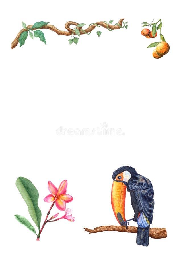 艺术性手拉热带toucan在分支,蜜桔果子,赤素馨花花,藤本植物 库存例证