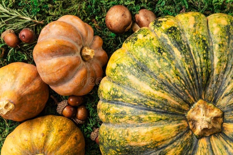 艺术性的季节性南瓜、胡桃和蘑菇特写镜头顶视图  库存图片