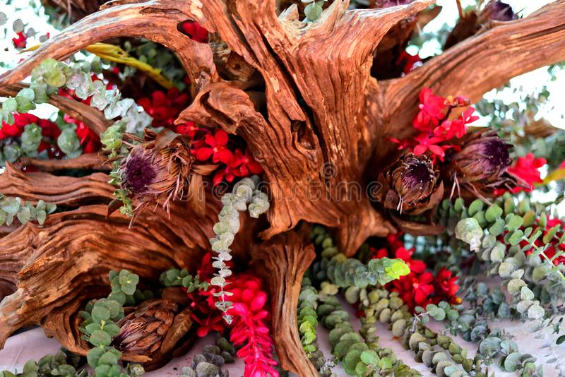 艺术性的植物 图库摄影