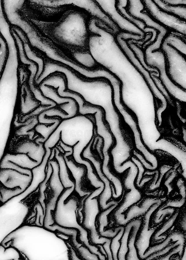 艺术性的照片oc圆白菜在艺术性的黑白照片过来,圆白菜菜细节紧密  库存照片