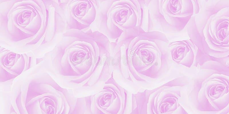 艺术性的甜美好的软的桃红色玫瑰纹理 图库摄影