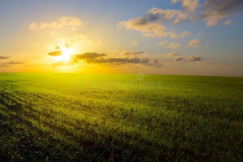 艺术春天领域、日出和蓝天 库存照片