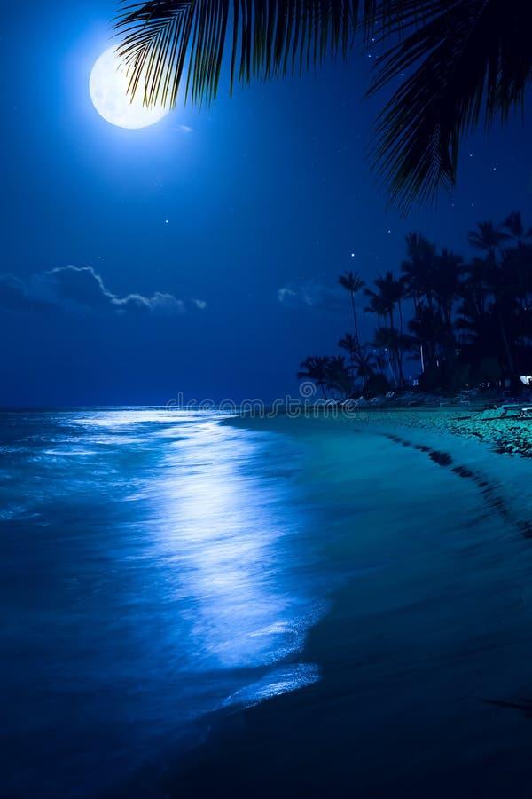 艺术月光热带海海滩夜 库存图片