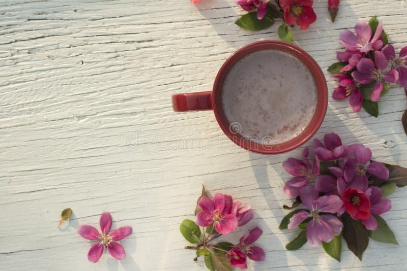 艺术桃红色春天开花与杯子的框架在老白色木背景 免版税库存照片