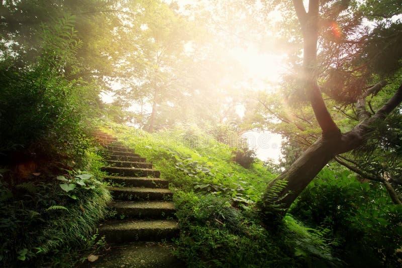 艺术美好的平安的风景;道路在老公园 免版税库存照片