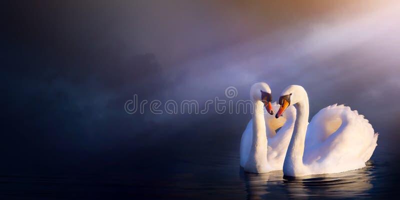 艺术美好的言情风景;爱夫妇白色天鹅 免版税库存照片