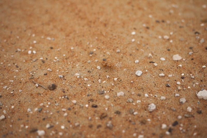 艾因红色沙子  免版税库存图片