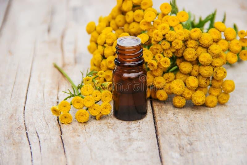 艾菊医药萃取物,酊,滴露,油,在一个小瓶 图库摄影