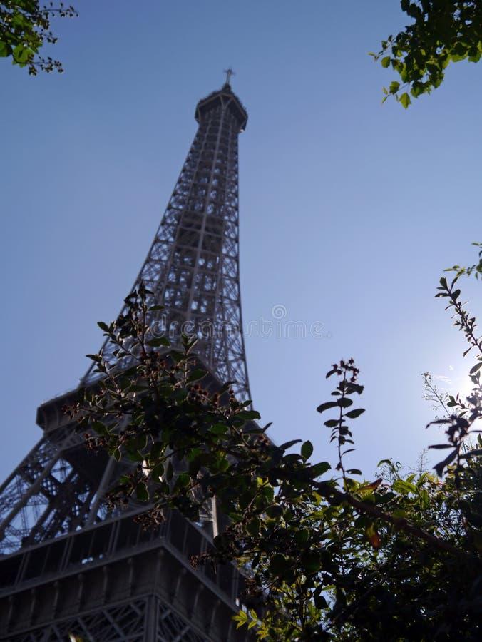 艾菲尔铁塔通过叶子 库存图片