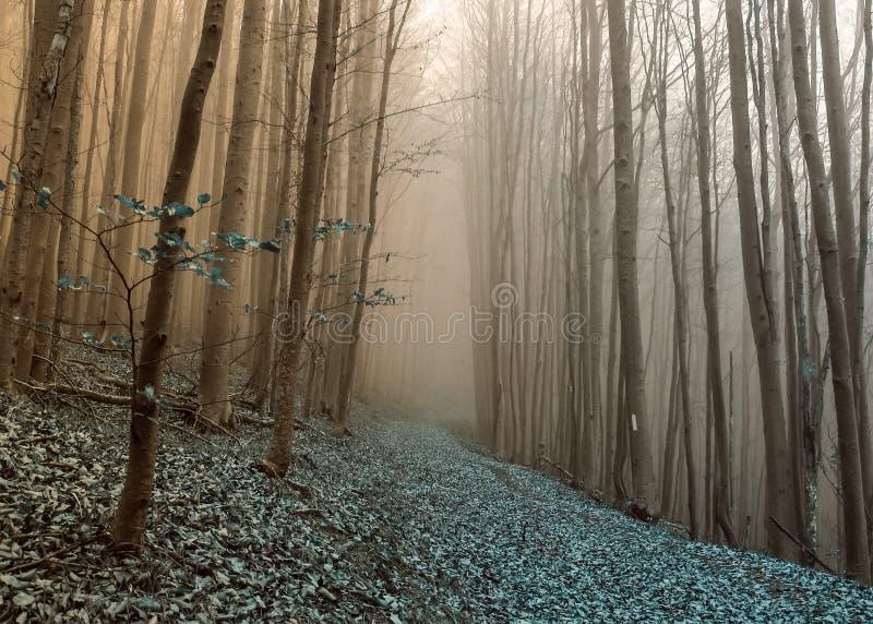 节奏布鲁斯在有雾的森林里 库存照片