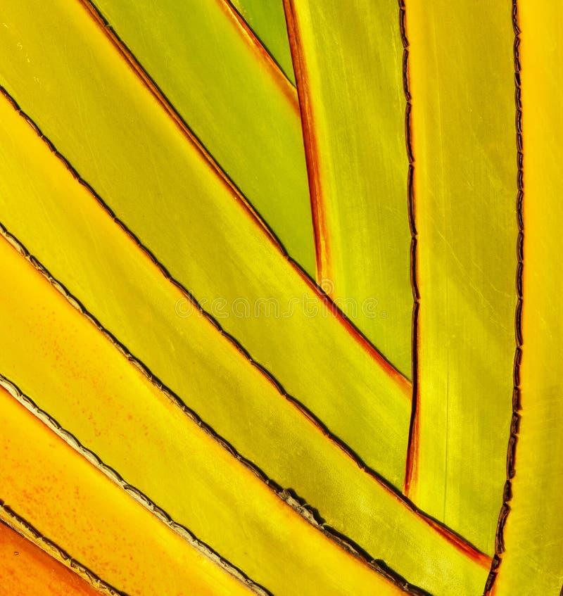 细节棕榈树 库存图片