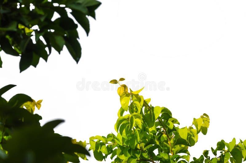 细节隔绝了叶子 图库摄影