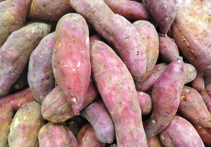 芋头通过出口作为食物的变厚代理forsome类型使用的Asiaand耕种 库存照片