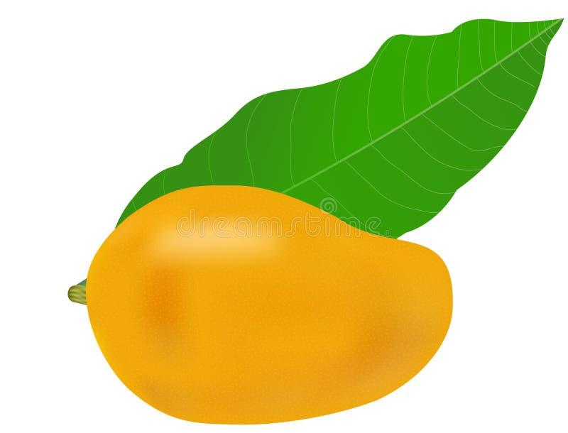 芒果和叶子 库存例证