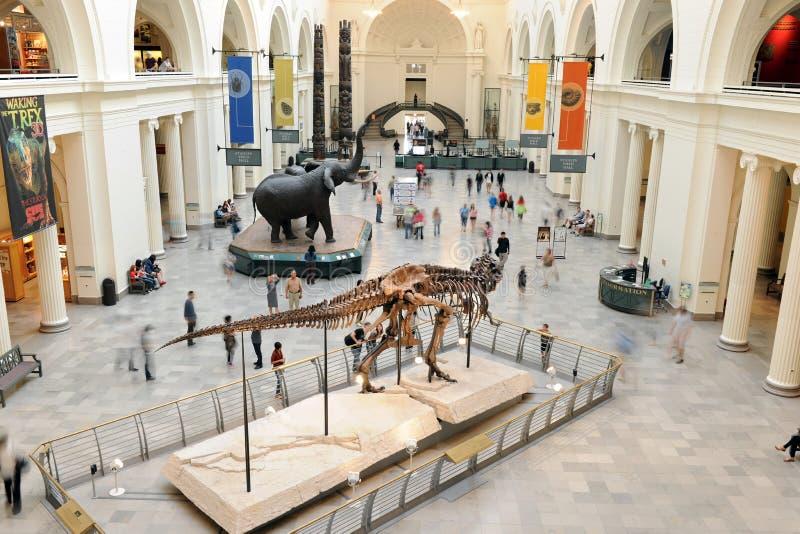 芝加哥的自然历史域博物馆  免版税图库摄影