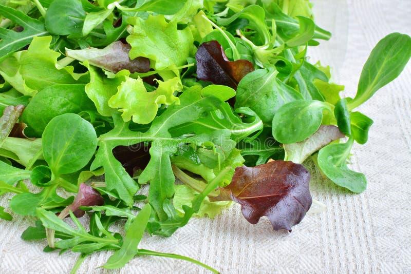 芝麻菜, mesclun, mache新鲜的混杂的绿色蔬菜叶  免版税库存图片