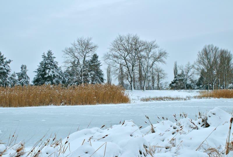 芦苇和冻河岸前景的 乏味的Donbass风景,乌克兰 库存图片