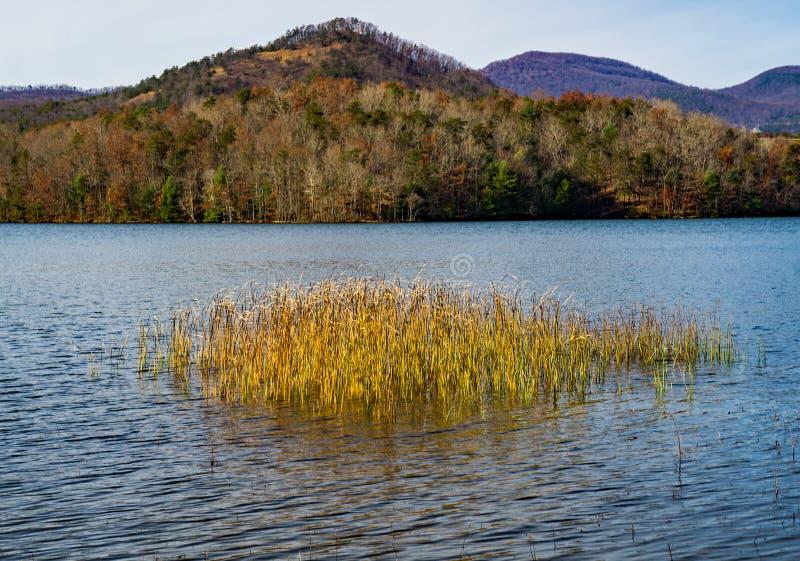芦苇和Carvins小海湾水库,罗阿诺克,弗吉尼亚,美国秋天视图  免版税图库摄影