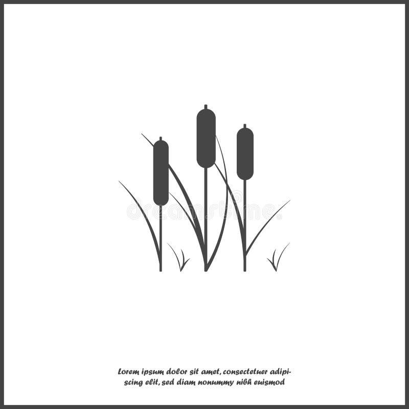 芦苇植物传染媒介象 芦苇的例证在白色被隔绝的背景的 向量例证