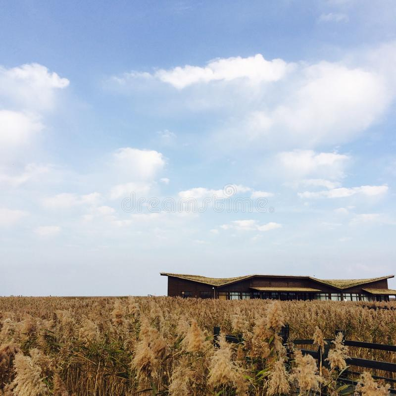 芦苇的房子在秋天 免版税库存照片