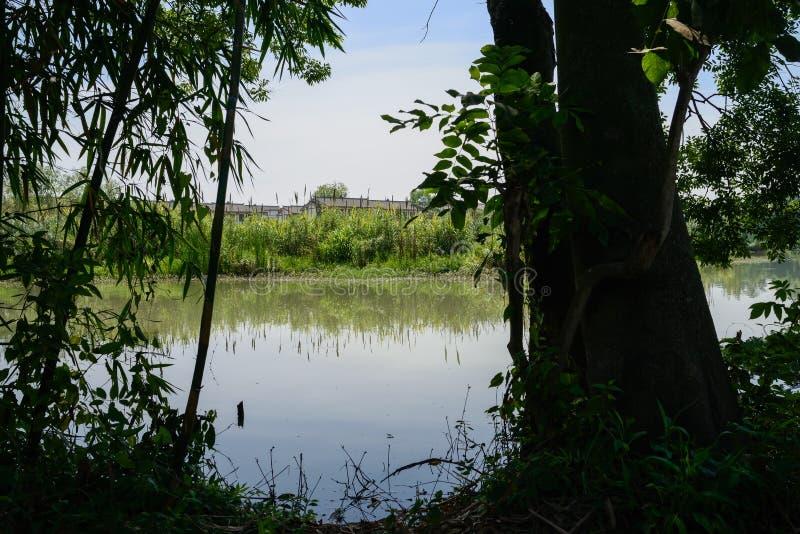 芦苇的湖边村庄在晴朗的夏日 免版税库存照片