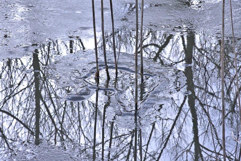 芦苇高词根熔铸了在冰冷的水的黑暗的反射 免版税库存照片