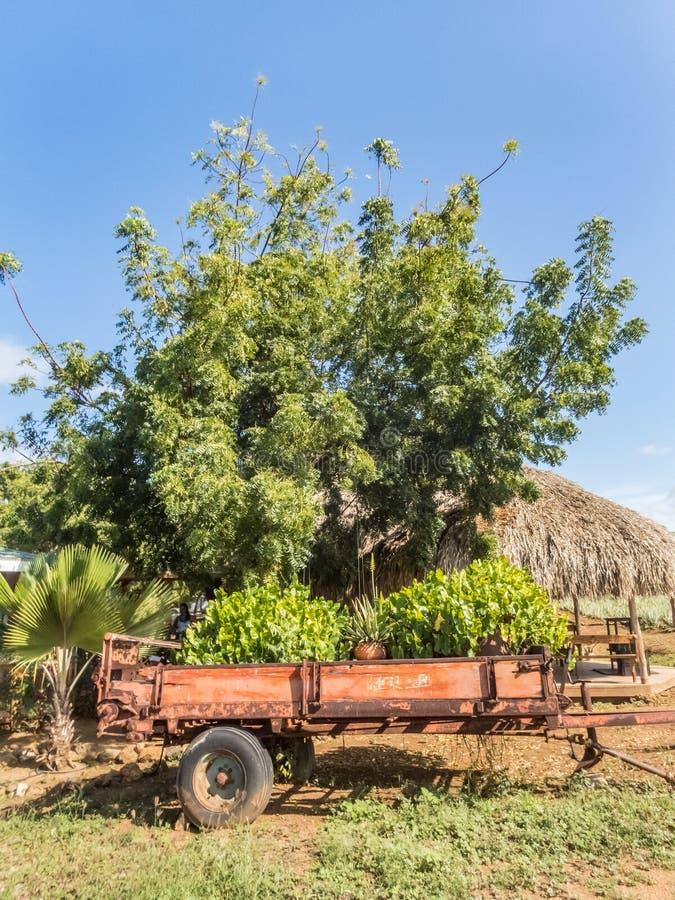 芦荟维拉东边库拉索岛景色的农厂ATV游览 库存照片