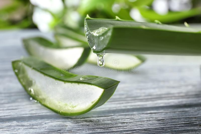 芦荟维拉从绿色叶子,特写镜头的汁液水滴 免版税库存图片