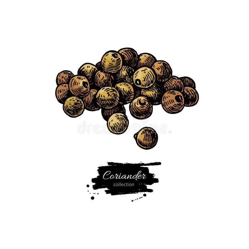 芫荽子堆传染媒介手拉的例证 被隔绝的香料对象 五颜六色的调味料 库存例证