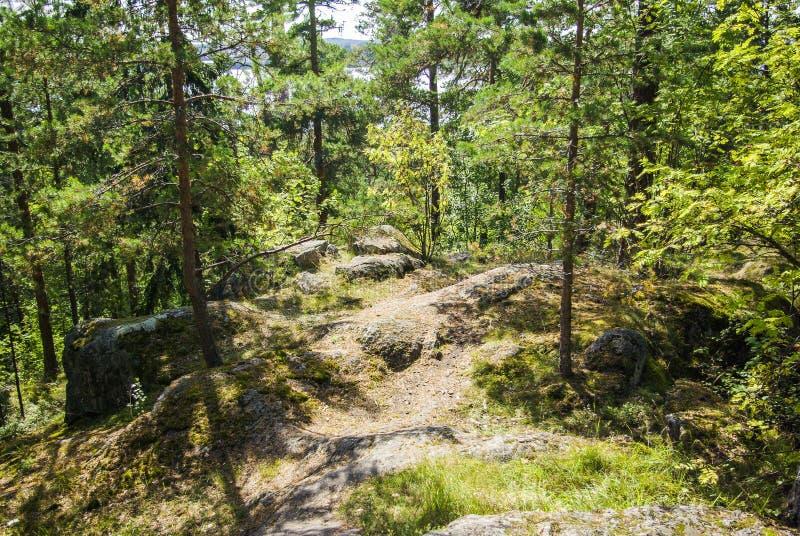 芬兰森林 免版税库存图片