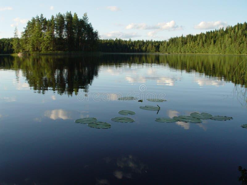 芬兰湖森林 免版税库存照片